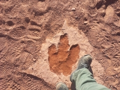 Dinosaur_Footprint_2014