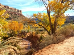 Zion Tour_Fall Leaves_2016